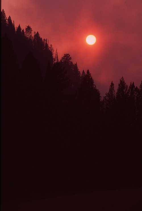 Yellowstone fire in 1988.  Paul Fraughton/The Salt Lake Tribune.