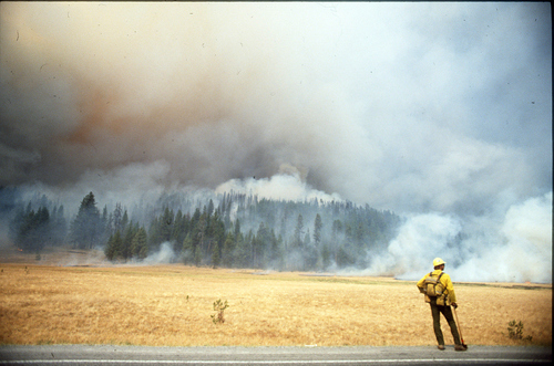 Yellowstone fire in 1988.  Paul Fraughton/The Salt Lake Tribune.