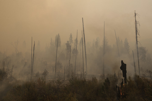 A smoke rises from smoldering trees as firefighters continue to battle the Rim Fire near Yosemite National Park, Calif., on Sunday, Aug. 25, 2013. With winds gusting to 50 mph on Sierra mountain ridges and flames jumping from treetop to treetop, hundreds of firefighters have been deployed to protect this and other communities in the path of the Rim Fire raging north of Yosemite National Park. (AP Photo/Jae C. Hong)