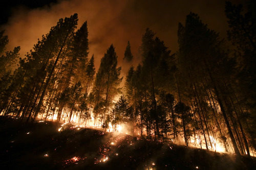 Trees burn in a burnout fire as firefighters continue to battle the Rim Fire near Yosemite National Park, Calif., on Sunday, Aug. 25, 2013. Fire crews are clearing brush and setting sprinklers to protect two groves of giant sequoias as a massive week-old wildfire rages along the remote northwest edge of Yosemite National Park. (AP Photo/Jae C. Hong)
