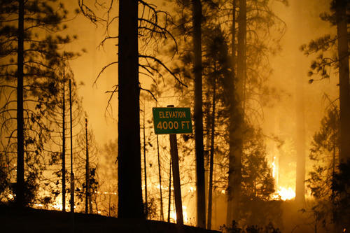 The Rim Fire burns near Yosemite National Park, Calif., on Saturday, Aug. 24, 2013. Fire crews are clearing brush and setting sprinklers to protect two groves of giant sequoias as a massive week-old wildfire rages along the remote northwest edge of Yosemite National Park. (AP Photo/Jae C. Hong)