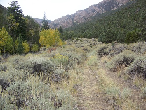 """Juab County has agreed to drop to its legal quest to gain title to this """"road"""" up Trout Creek as part of a settlement resolving all its R.S. 2477 claims in the Deep Creek Mountains' wilderness study area.  Photo courtesy of the Southern Utah Wilderness Alliance."""