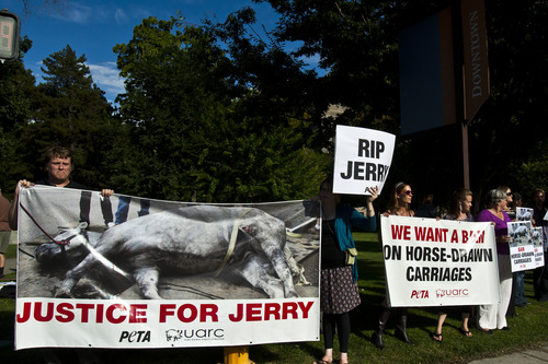 Chris Detrick  |  The Salt Lake Tribune Skip Rynearson, of Taylorsville, and others hold signs during a vigil for Jerry the horse put on by Utah Animal Rights Coalition outside of the Salt Lake City and County Building Tuesday August 27, 2013.  Jerry, a 13-year-old horse died on Friday, about a week after he collapsed while pulling a carriage in downtown Salt Lake City.