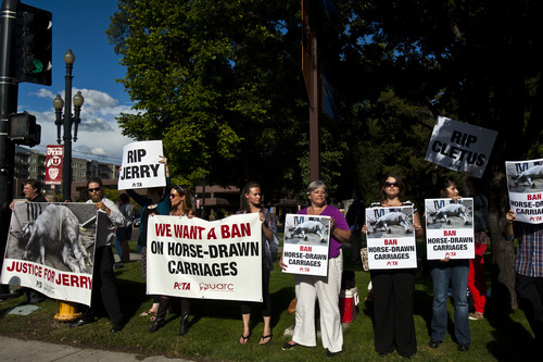 Chris Detrick  |  The Salt Lake Tribune People hold signs during a vigil for Jerry the horse put on by Utah Animal Rights Coalition outside of the Salt Lake City and County Building Tuesday August 27, 2013.  Jerry, a 13-year-old horse died on Friday, about a week after he collapsed while pulling a carriage in downtown Salt Lake City.
