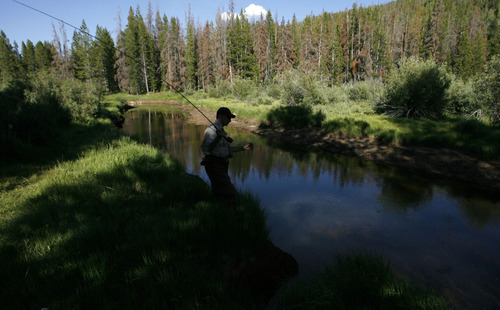 Uinta Mountains -   DWR aquatic biologist, Matt McKell, fishes along the banks of the Hayden Fork river in the Uinta Mountains Monday Jul 20, 2009.  Steve Griffin/The Salt Lake Tribune 7/20/09