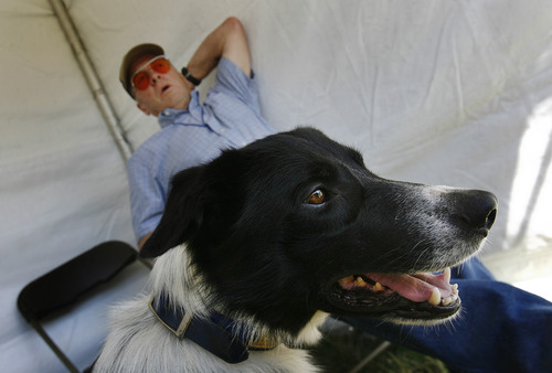Scott Sommerdorf  |  The Salt Lake Tribune Tom Wilson's dog Roy is locked in on another dog working with sheep in the field at The Soldier Hollow Sheepdog Competition at Soldier Hollow, Saturday, August 31, 2013. After coming here from Virginia, the former Scotsman and Roy were waiting for their turn to compete.