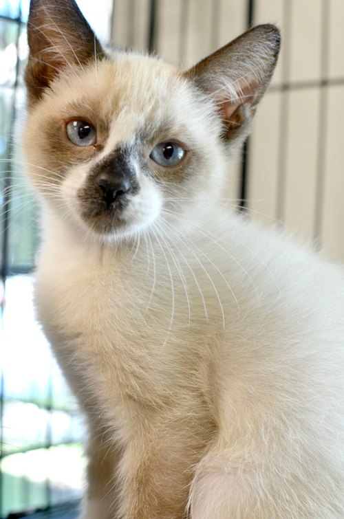 Bubby • One of 400 kittens saved by Salt Lake County Animal Services, this 14-week-old is free, like the other cats and kittens, until the end of September. Stop by and see them for yourself.