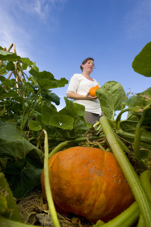 Paul Fraughton  |  The Salt Lake Tribune Pumpkins and squash were popular vegetables planted at the new Hillsdale Community Garden, which was started largely by Andrea Aguin, its first official steward.