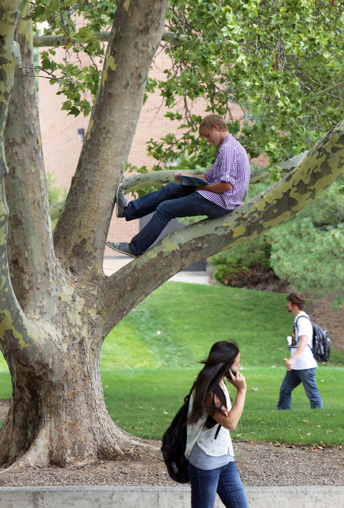 "Francisco Kjolseth  |  The Salt Lake Tribune University of Utah Freshman Mitch Ewing reads a book on quantum mechanics after climbing a tree to get a ""fresh perspective"" as students resume classes for the year on Monday, August 26, 2013.  The U. is ranked at No. 121 among national schools by U.S. News and World Report."