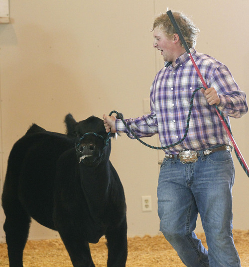 Al Hartmann  |  The Salt Lake Tribune Phillip Peart of Hat Ranch in Randolph, Utah is happy about his  cow winning the Overall Female Supreme Champion ribbon Sunday afternoon on the final day of the Utah State Fair.
