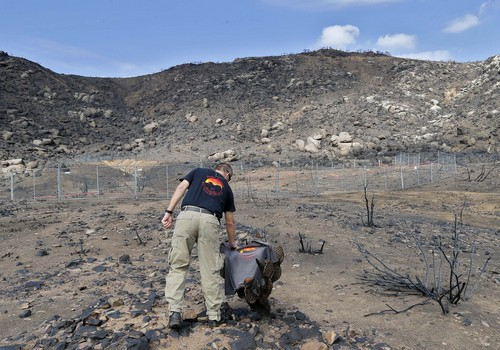 FILE -In this Tuesday, July 23, 2013 file photo, Prescott Wildland Division Chief Darrell Willis touches A Granite Mountain Hot Shots crew shirt draped over a burned cactus,  in Yarnell, Ariz. Investigators are set to release a report Saturday, Sept. 28, 2013, on the deaths of the 19 elite firefighters who became trapped by flames in a brush-choked canyon north of Phoenix. (AP Photo/Matt York, File)