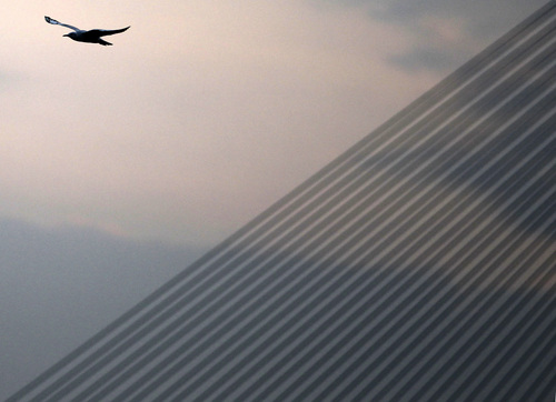 A seagull flies over the cable-stayed Ada Bridge over the Sava river during the sunset, in Belgrade, Serbia, Saturday, Sept. 28, 2013. Forecasters predict rainy autumn weather for the upcoming days in Serbia. (AP Photo/Darko Vojinovic)