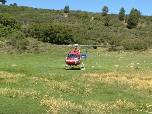 | Courtesy Utah Division of Wildlife Resources A medical helicopter from Grand Junction takes off Wednesday with a sheepherder who had been gored by a bull elk on the LaSal Mountains east of Moab.