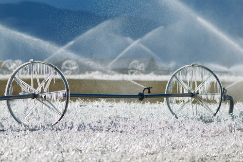 Trent Nelson     The Salt Lake Tribune Ice forms as fields are irrigated near Loa, Sunday, October 6, 2013.