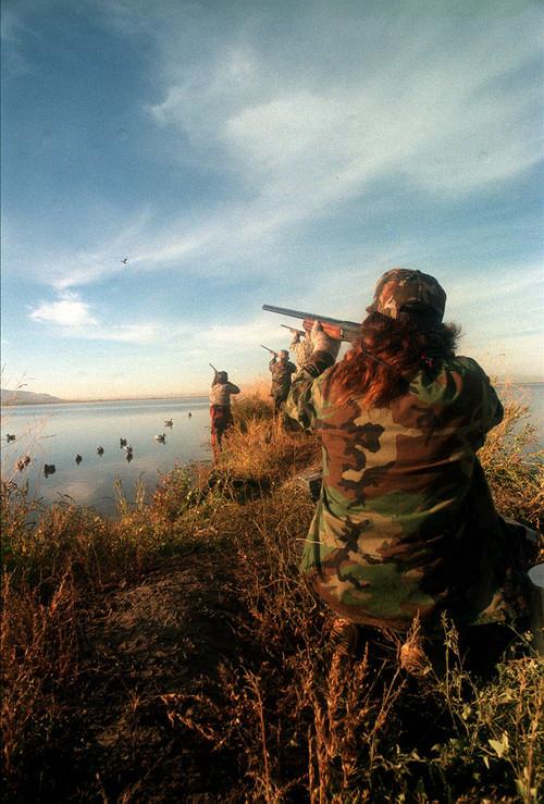    Tribune file photo  Hunters zero in on a duck for the kill at Farmington Bay.