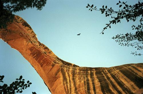 Al Hartmann  |  Tribune file photo  A crow flies over Sippapu Bridge in Natural Bridges Natural Monument.