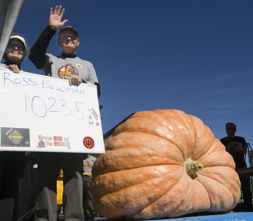 Rick Egan     The Salt Lake Tribune The Utah Giant Pumpkins Growers weigh a giant pumpkin at the annual pumpkin weigh-off at Thanksgiving Point on Saturday, September 28, 2013. Ross and Kaye Bowman's was not the largest of the day but he has grown 5 pumpkins weighing more than 1000 lbs, in the past three years.