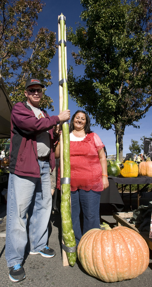 Rick Egan    The Salt Lake Tribune   Ralph and Juana Laub, display their 106 1/2 inch gourd they grew in Vernal, at the Utah Giant Pumpkins annual pumpkin weigh-off at Thanksgiving Point on Saturday, September 28, 2013.  Their gourd was the tallest gourd in todays competition.