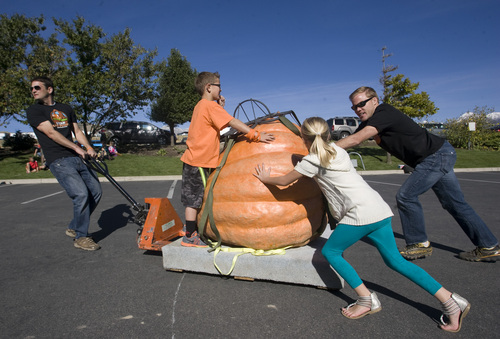 Rick Egan  | The Salt Lake Tribune   It takes three people to move a giant pumpkin, at the Utah Giant Pumpkins annual pumpkin weigh-off at Thanksgiving Point on Saturday, September 28, 2013.