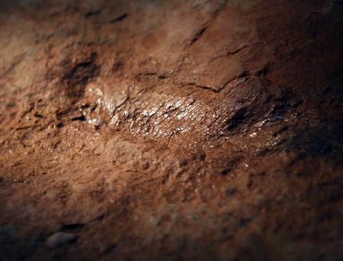 Rick Egan  | The Salt Lake Tribune   A fossil of a fish found by paleontologist Randy Irmis, around Indian Creek.  Friday, October 4, 2013.