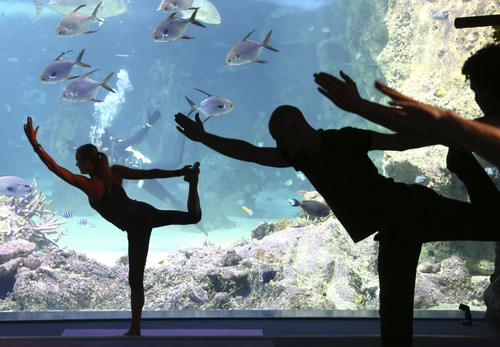 """Vivien Speers, front left, assists instructor Sasha Hawley, back, instruct a yoga class at the Sydney Sea Life Aquarium in Sydney, Thursday, Oct. 17, 2013. Hawley, who founded """"Yoga by the Sea,"""" instructs the class from inside a tank that includes Leopard  Sharks, Black Tip Reef Sharks, Grey Reef Shark and a Smalltooth Sawfish. (AP Photo/Rick Rycroft)"""
