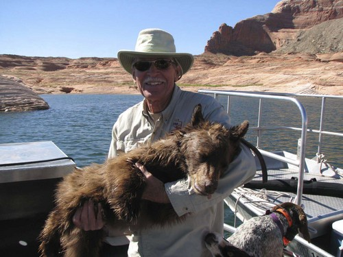| Courtesy Utah Division of Wildlife Resources Wayne Gustaveson, holding the young male black bear that decided to go for a swim after being tranquilized, but before the drug took full effect. Jason Nicholes, a wildlife biologist with the Utah Division of Wildlife Resources, reached the bear after the it passed out but before it inhaled any water.