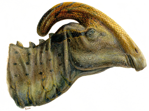 Lukas Panzarin  |  Courtesy image Artist's reconstruction of the head of an adult Parasaurolophus.