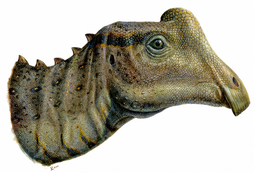 "Lukas Panzarin  |  Courtesy image Artist's reconstruction of the head of the baby Parasaurolophus nicknamed ""Joe."""