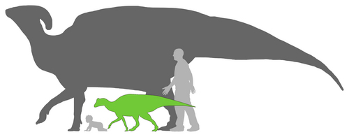 Scott Hartman, Matt Martyniuk, Andrew Farke  |  Courtesy image Silhouettes of adult and baby Parasaurolophus, relative to adult and baby humans.