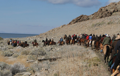 Francisco Kjolseth  |  The Salt Lake Tribune Riders from near and far numbering 430 move a herd of more than 500 bison along the rocky western shores of Antelope Island during the 26th annual bison roundup on Friday, October 26, 2012.