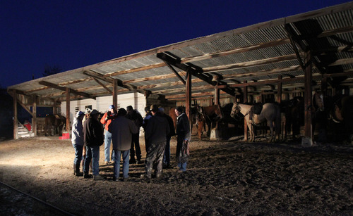 Francisco Kjolseth  |  The Salt Lake Tribune Riders with R&G Horses gather in the pre-dawn hours by the stables at the ranch house on Antelope Island as they get ready for customers who will saddle up for a roundup. Riders from near and far numbering 430 gathered to move a herd of more than 500 bison on Antelope Island during the 26th annual bison roundup on Friday, October 26, 2012.