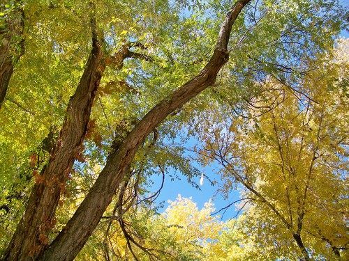 S. Mark Hansen  |  The Salt Lake Tribune Trees show their fall colors on Friday, October 25, 2013. The weekend should feature warm days and sunny skies before a cold front rolls in on Monday.