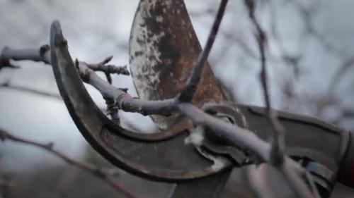 "(Courtesy of Zack Brym     Screenshot) Excessive pruning in ""Prune to Wild."""