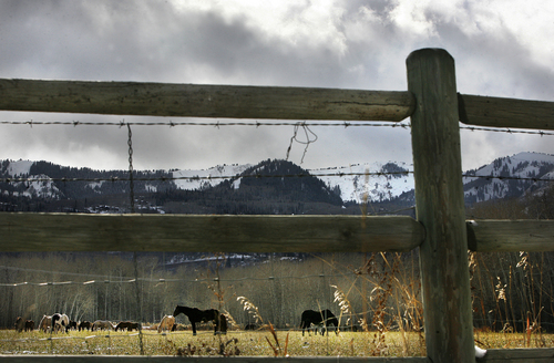 Scott Sommerdorf   |  The Salt Lake Tribune Horses graze in a field under changeable weather between Jeremy Ranch and Park City, Sunday, November 3, 2013.