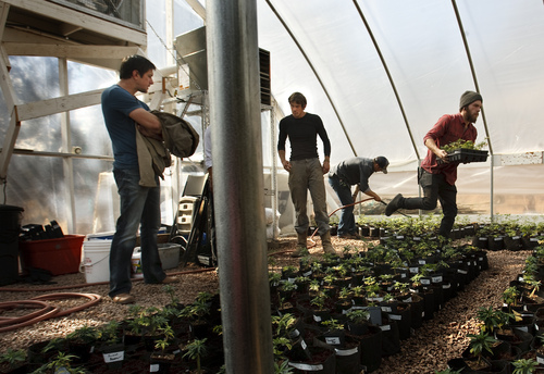 "Leah Hogsten  |  The Salt Lake Tribune Joel Stanley talks with his brother, Jared Stanley who oversees the Realm of Caring Foundation's ""grow,"" two greenhouses filled with a variety of strains of marijuana plants, October 25, 2014."