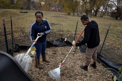 Rick Egan    The Salt Lake Tribune   Lesiela Pulu and Robert Beralta work in a wildlife patch that their class from West High has been working on, near the Jordan River , Friday, November 15, 2013. A group of about 60 West high students are working on the environmental education project funded by the EPA's Urban Waters program.