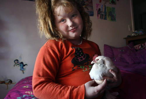 Scott Sommerdorf   |  The Salt Lake Tribune Seven-year-old Emma Williams' pet chicken, Flutter, went missing from her home. She is now left with just one pet chicken, Snowy, shown here, Saturday, October 26, 2013. The family hopes that someone might come forward with information about the missing Flutter.