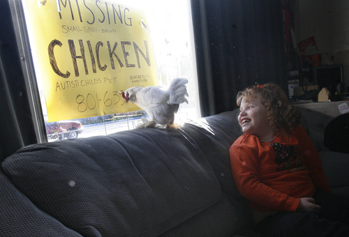 Scott Sommerdorf   |  The Salt Lake Tribune Seven-year- old Emma Williams' pet chicken, Flutter, went missing from her home. She is now left with just one pet chicken, Snowy, shown here, Saturday, October 26, 2013. The family hopes that someone might come forward with information about the missing Flutter.