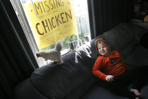 Scott Sommerdorf   |  The Salt Lake Tribune Seven-year-old Emma Williams' pet chicken, Flutter, went missing from her home. She is now left with just one pet chicken, Snowy, shown here in October. The family hopes that someone might come forward with information about the missing Flutter.