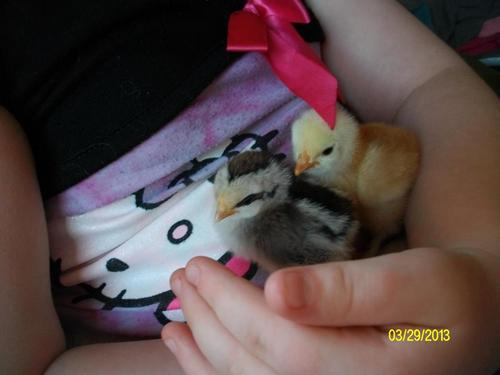 Courtesy photo Emma Williams, 7, holds Flutter and Snowy as chicks. Emma holds onto hope that Flutter, who has been missing since September, will be found.
