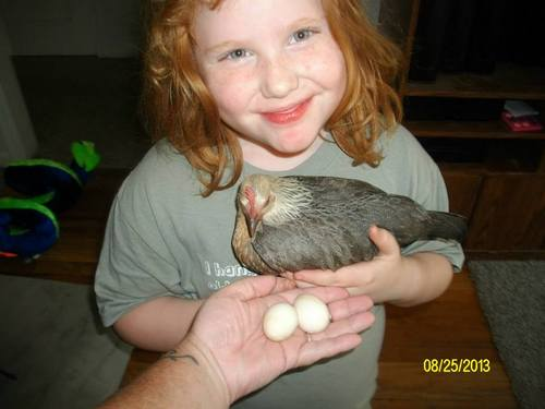 Courtesy photo Emma Williams, 7, holds Flutter with eggs the pet chicken laid in a basket under the couch. Emma holds onto hope that Flutter, who has been missing since September, will be found.