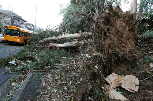 A school bus drives past a fallen eucalyptus tree in Oakland, Calif., on Friday, Nov. 22, 2013. Three people were killed in Northern California as high winds battered the region and caused major power outages, and fallen trees and branches.  (AP Photo/The Tribune, Laura A. Oda)