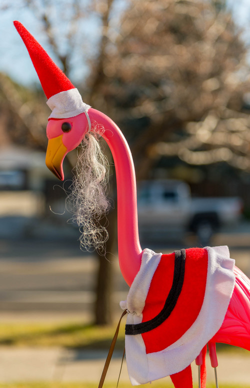 Trent Nelson     The Salt Lake Tribune A Christmas-themed flamingo outside of The Old Flamingo in East Millcreek, Friday November 29, 2013.