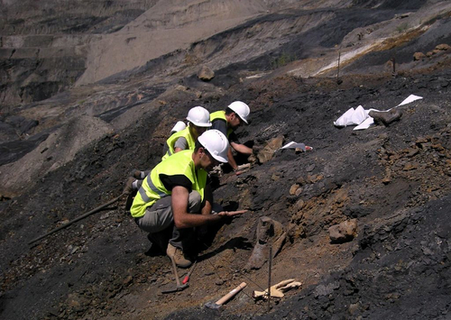 Courtesy of James Kirkland Europelta is excavated from a Spanish coal mine.
