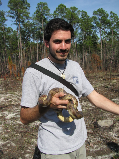 Courtesy of Sandy Durso Utah State graduate student Andrew Durso holds a pine snake in Georgia.