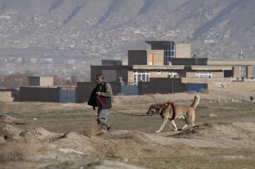 An Afghan man arrives with his dog at a weekly dogfighting event in Kabul, Afghanistan, Friday, Dec. 13, 2013. Dogfighting is a popular form of entertainment during the winter season in Afghanistan as public matches are held every Friday, which is the official weekly holiday in the country. Dogs do not fight until death but rather until one dog pins another, or one of the fighters runs away. (AP Photo/Rahmat Gul)