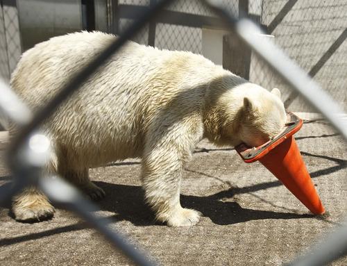 Tribune file photo Tribune Choice Awards: Hogle Zoo.