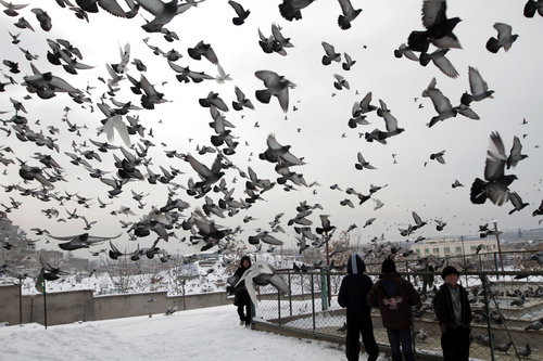 Pigeons fly outside the Karti Sakhi shrine in Kabul, Afghanistan, Monday, Dec. 30, 2013. Kabul has been experiencing below freezing weather and snow. (AP Photo/Rahmat Gul)