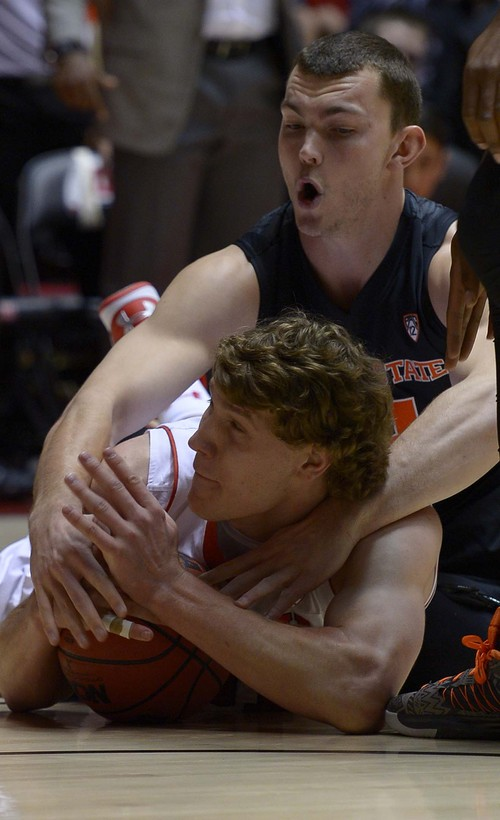 Leah Hogsten  |  The Salt Lake Tribune Utah Utes center Dallin Bachynski (31) grabs the loose ball from Oregon State Beavers center Angus Brandt (12).The University of Utah defeated Oregon State 80-69 during their game Saturday, January 4, 2014 at the Huntsman Center.