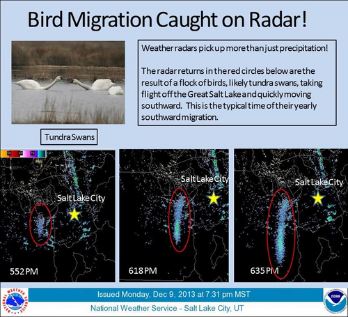 Courtesy National Weather Service  The radar returns in the red circles are the result of a flock of birds, likely tundra swans, taking flight off the Great Salt Lake and quickly moving southward. This is the typical time of their yearly migration.
